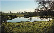 SE3265 : Pond, Bishop Monkton by Derek Harper