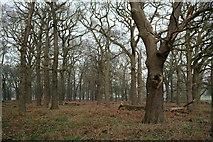 TQ2173 : Richmond Park by Peter Trimming