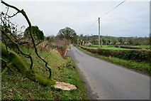 H5956 : Fallen tree branch along Glenhoy Road, Cleanally by Kenneth  Allen