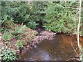 TL8193 : Stream from Lynford Lakes by David Pashley