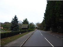 TQ0165 : Looking south-east along Lyne Lane by Basher Eyre