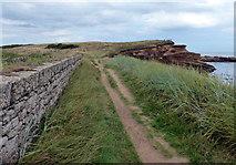 NU2617 : Northumberland Coast Path and St Oswald's Way near Rumbling Kern by Mat Fascione
