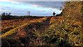 SE8791 : Prehistoric linear boundary, Bridestones Moor by Mick Garratt