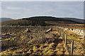 SD7689 : Felled Plantation by Chris Heaton