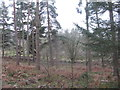 NY5726 : Woodland at Whinfell by M J Richardson
