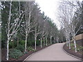 NY5726 : Festive lights at Center Parcs Whinfell - day by M J Richardson