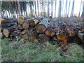TL7996 : Rotting logs by David Pashley