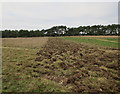 TF7507 : Field edge, Beachamwell Warren by Hugh Venables