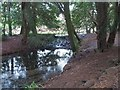 TL8193 : Weir between Lynford Lakes by David Pashley