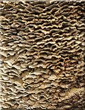 SX9164 : Fungus, Upton Park, Torquay by Derek Harper