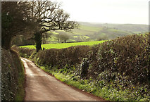 SX8460 : Lane to Longcombe by Derek Harper