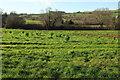 SX7866 : Meadow in the Hems valley by Derek Harper