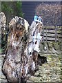 NY9260 : The welly boot tree by Oliver Dixon