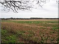 TL8096 : View across bare field with Conifer Hedge line in distance by David Pashley