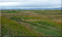 NS3229 : Royal Troon Golf Club by Thomas Nugent