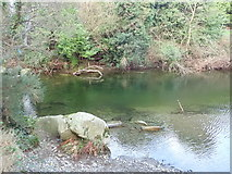 J3731 : Low water in the Shimna River at Tipperary Wood by Eric Jones