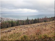 J3630 : View towards Dundrum Bay across a recently harvested section of Donard Wood by Eric Jones