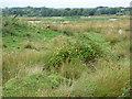 NS3041 : Garnock Floods wildlife reserve by Thomas Nugent