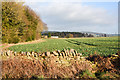 NZ0457 : Field with leafy crop by Trevor Littlewood