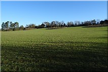 SO8845 : Field in Croome Park by Philip Halling