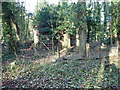 SJ3654 : Ruin in the woods by Eirian Evans