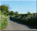 SO4385 : Country road, Wistanstow by Stephen Richards