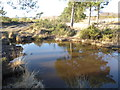 TQ4829 : Pond next to the Vanguard Way in the Ashdown Forest by Marathon