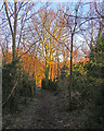 TM2744 : Waldringfield: sunlight and shadow on Christmas morning by John Sutton