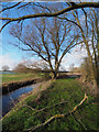 TL8599 : Old Willow tree by David Pashley