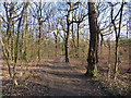SE2929 : Path through Middleton Park by Stephen Craven