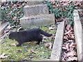 TQ2886 : A black cat in Highgate Cemetery by Marathon