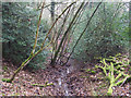 TL8193 : Overgrown stream by David Pashley
