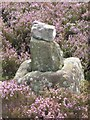 NZ6105 : Old Wayside Cross by Middle Head Road, Westerdale Parish by Milestone Society