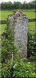 TM1469 : Old Guide Stone by the B1077, The Street, Thorndon Parish by Milestone Society
