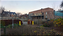 SE5952 : Artists' Garden and Edible Wood at York Art Gallery by Phil Champion