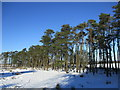NS8561 : Scots Pines near Easter Fortissat by Alan O'Dowd