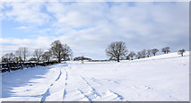 NZ1136 : Snowed field south of Thornley by Trevor Littlewood