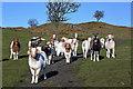 NX6865 : Goats at Bellymack Hill Farm by Walter Baxter