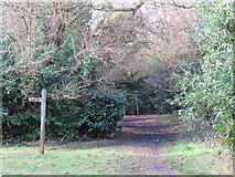 TQ2255 : Bridleway into the woods, Tadworth by Malc McDonald