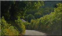 S7754 : Rural road, County Carlow by N Chadwick