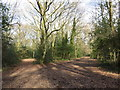 TQ2255 : Winter shadows, Banstead Heath by Malc McDonald
