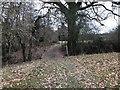 TQ6228 : Path Junction by Chris Thomas-Atkin