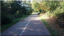 TQ5940 : Footpath & Cyclepath by John P Reeves