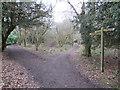 TQ2352 : North Downs Way near Reigate by Malc McDonald