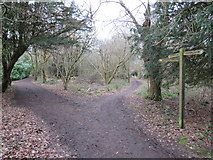 TQ2352 : North Downs Way near Reigate by Malc McDonald