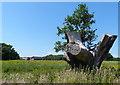 TM5183 : Old tree stump along the Suffolk Coast Path by Mat Fascione