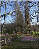 TL4458 : Trinity College: The Avenue, back gate and crocuses by John Sutton