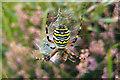 SZ0384 : Argiope bruennichi (Wasp Spider) by Phil Champion