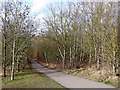 SO7584 : Birch wood in the Country Park near Alveley, hrophire by Roger  Kidd