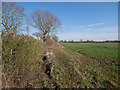 TF9204 : Field headland and hedge by David Pashley